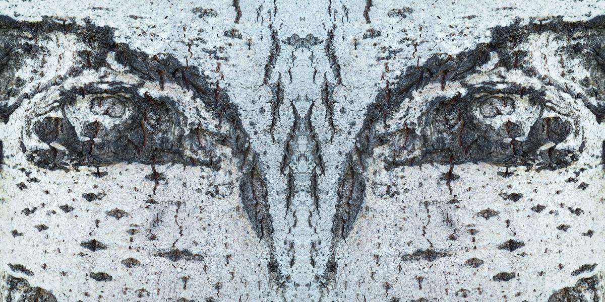 Guillem-Vidal-Mascares-mirades-01